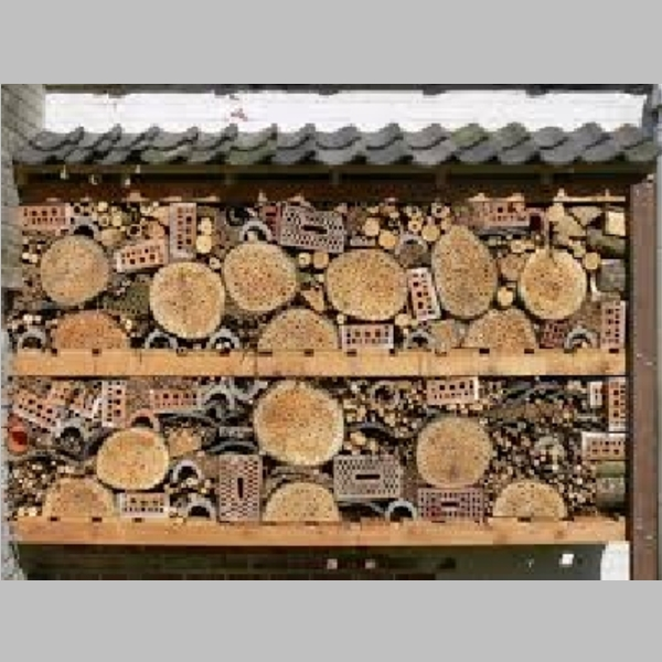 Insect_Hotel_50.jpg